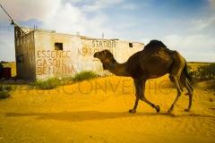 Foto_TUN_Camel